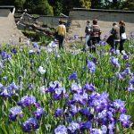 iris Parc floral de la Source,Orléans -Loiret Julie Danet