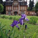 Morchène Iris 4 credit sonia baudu