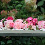rose-roquelin-loire ADRTL